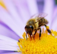 bee-flower-520x245